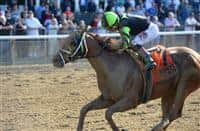 Celtic Chaos wins 2017 Affirmed Success