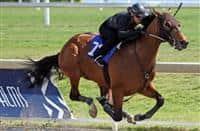 /horse/Cozanne