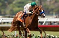 /horse/Chasing Yesterday