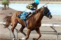 /horse/Chitu