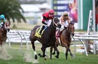 February 21, 2015:Chocolate Ride with Jesus Castanon up wins the Fairgrounds Handicap at the New Orleans Fairgrounds Risen Star Stakes Day. Steve Dalmado/ESW/CSM