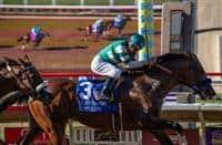 /horse/Cistron