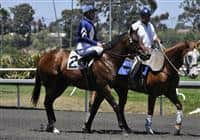 Classical Slew before the Hollywood Juvenile Championship - 2009