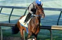 /horse/Combatant 1