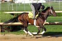 Commanding Curve is in Kentucky Derby 2014