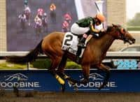 Cryptic Message wins Shady Well