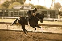 Hard Seven galloping at Turf Paradise with Rosco.
