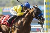 /horse/Dabster 1