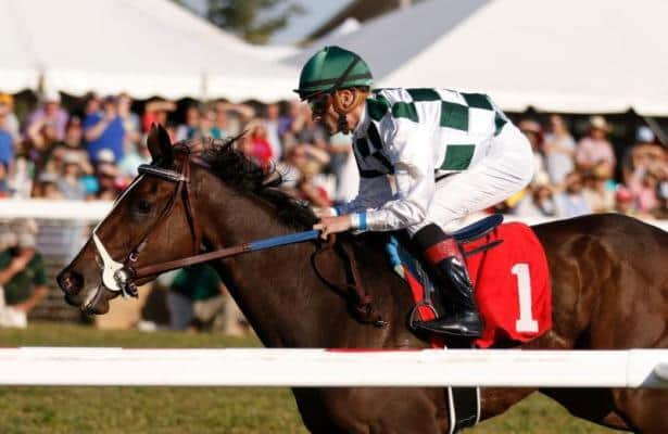 Daddys Lil Darling looks to add another stakes win in Modesty Handicap