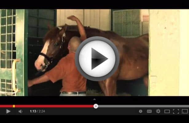 Darby Dan Farm Launches New Tour (VIDEO)