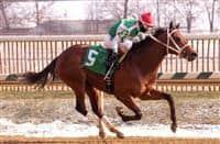 Diamond King wins 2017 Heft Stakes
