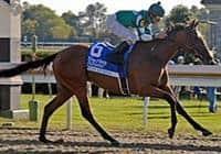 /horse/Dream Empress
