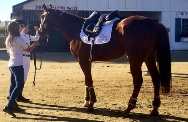 San Luis Rey fire survivor Dream Police takes off in second career