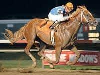 /horse/Duke Of Mischief