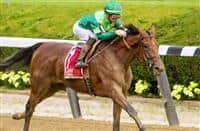 /horse/Dunbar Road
