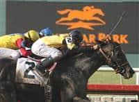 /horse/El Gato Malo
