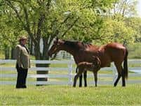 Kobla with Quality Road as a foal