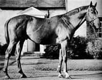/horse/Eight Thirty