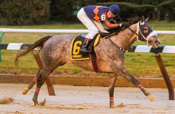 El Areeb stands out in the Withers