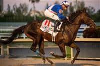 /horse/Ete Indien