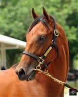/horse/Warrior Prince
