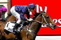 /horse/Fastnet Rock 1