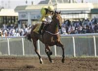 Forjatt - Emirates Racing Authority