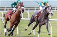 /horse/Gidu