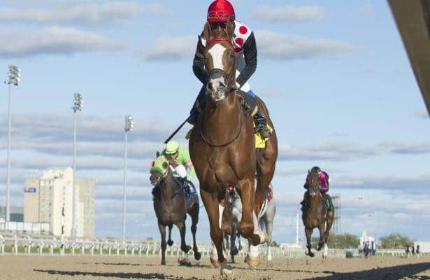 Golden Hawk takes off in Grey Stakes