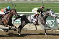 /horse/Graydar
