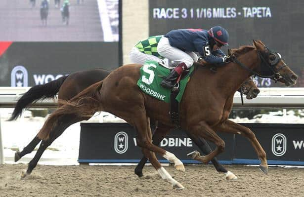 Gun Society ready to compete in Sunday's Fury Stakes