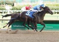 /horse/Hollywood Star 1