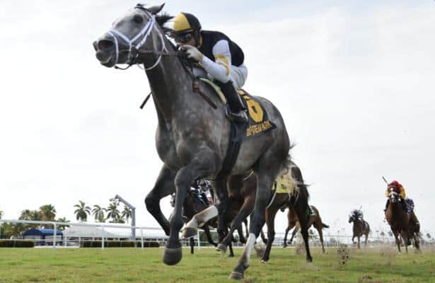 Halladay stays perfect at Gulfstream with Sunshine Forever win