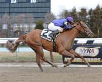 """Hardened Wildcat, winner of the 2012 Fred """"Cappy"""" Caposella Stakes at Aqueduct."""