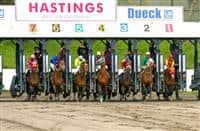 Hastings Racecourse starting gate