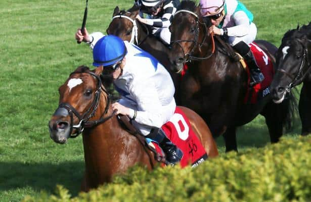 Multiple Grade 1 winner Heart to Heart to stand at stud in Kentucky