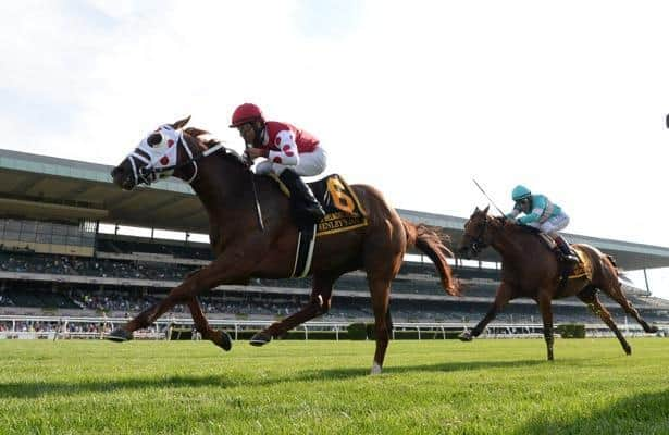Henley's Joy connections 'really excited' to take on Turf Trinity