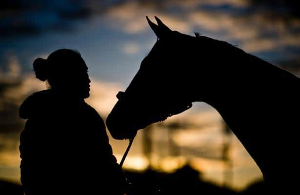 'It's sick': Advocate brings horse slaughter to light in Louisiana