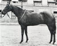 Horse Gaily big