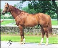 /horse/Meadowlake