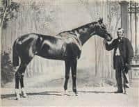 /horse/Vermouth