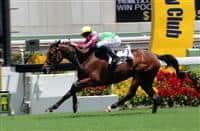 The Tony Millard-trained Horse Of Fortune (No.2) edges past Romantic Touch (No.3) and Harbour Master (No.4) to take the G3 Premier Plate Handicap (1800m) at Sha Tin Racecourse today.