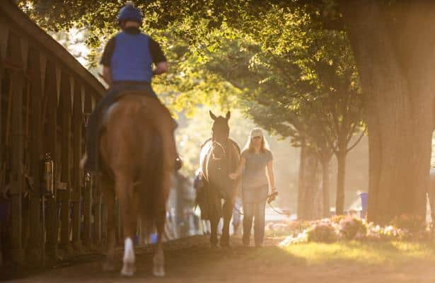 Key racing industry groups back Thoroughbred Safety Coalition