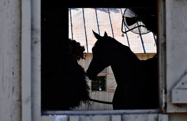 How much can a few picograms of anything do to a horse?