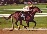 Champion Sprinter Housebuster