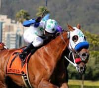 /horse/Hudson Landing