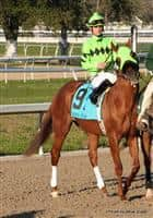 Stay Put ridden by Jamie Theriot in the Risen Star