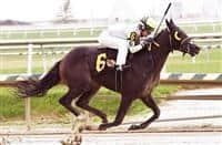 In Arrears wins at Laurel (9-11-16)
