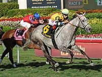 /horse/Inimitable Romanee