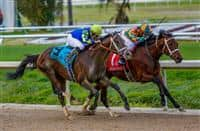 Intense Holiday powers past Albano to win the 2014 Risen Star Stakes